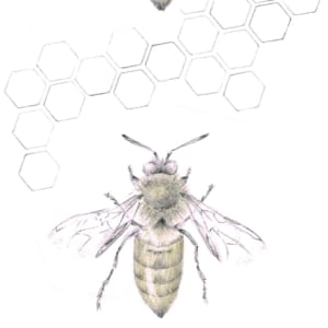 Honey Bee 3.15e by Louisa Crispin