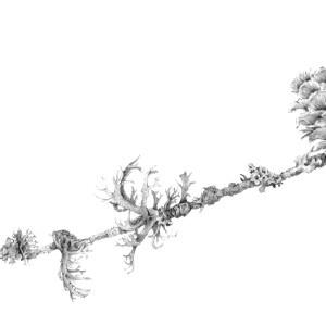 Lichen on Larch ii by Louisa Crispin