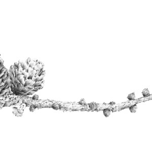 Lichen on Larch iii ~ Ramster by Louisa Crispin
