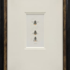 Red Tailed Bumble Bee 3.37e by Louisa Crispin