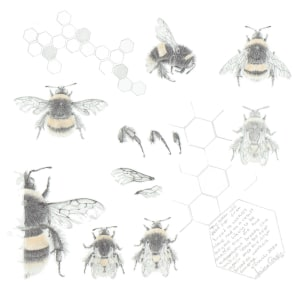 Study of a  BumbleBee 028 by Louisa Crispin