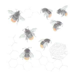 Study of a  BumbleBee 033 by Louisa Crispin