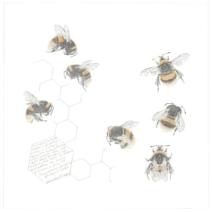 Study of a  BumbleBee 030 by Louisa Crispin