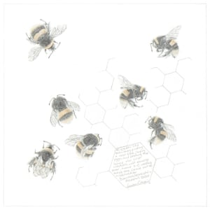 Study of a  BumbleBee 031 by Louisa Crispin