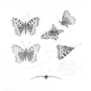 Study of a  Butterfly 001 ~ Small Tortoiseshell