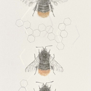Red Tailed Bumble Bee 3.21e by Louisa Crispin