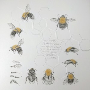 Study of a  BumbleBee 018 by Louisa Crispin