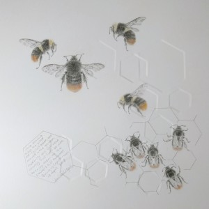 Study of a  BumbleBee 019 by Louisa Crispin
