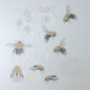 Study of a  BumbleBee 020 by Louisa Crispin