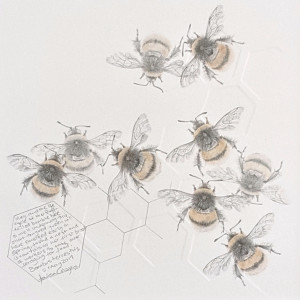 Study of a  BumbleBee 026