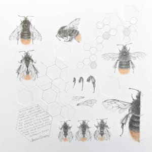 Study of a  BumbleBee 029 by Louisa Crispin