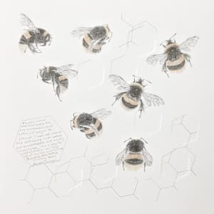 Study of a  BumbleBee 032 by Louisa Crispin