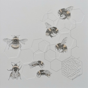 Study of a  BumbleBee 025 by Louisa Crispin