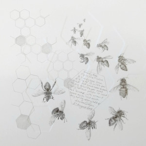 Study of a  HoneyBee 001 by Louisa Crispin