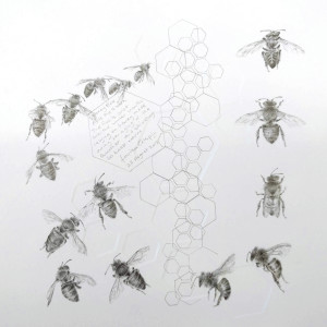 Study of a  HoneyBee 002 by Louisa Crispin