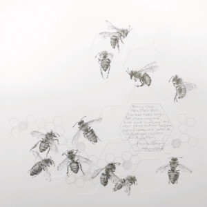 Study of a  HoneyBee 003 by Louisa Crispin