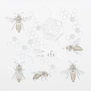 Study of a  HoneyBee 006 by Louisa Crispin