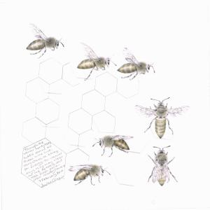 Study of a  HoneyBee 007 by Louisa Crispin