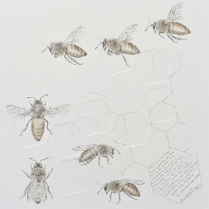 Study of a  HoneyBee 004 by Louisa Crispin