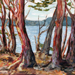 Arbutus Tree Morning St John's Point study