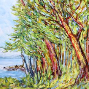 Arbutus Trees near Entrance to Active Pass
