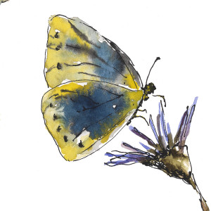 Butterflies 2 18x5 ecj6em