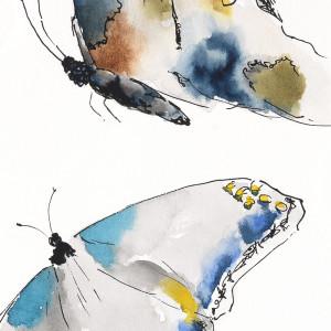 Butterflies 3 18x5 k6pwnp
