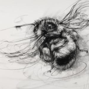 Orange-rumped Bumblebee (Bombus melanopygus)