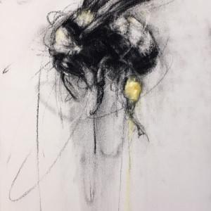 Sonoran Bumblee Flying Up (Bombus melanopygus)