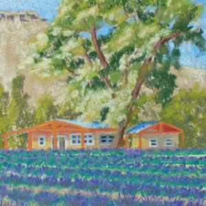 2017 abiquiu lavender field vs8nuw
