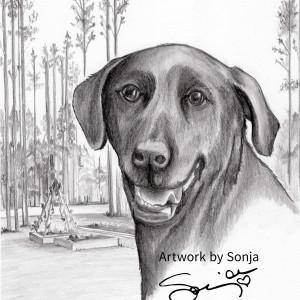Black Labrador Retriever Memorial Drawing