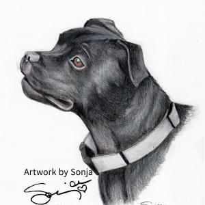 Pitbull Pet Portrait by Sonja