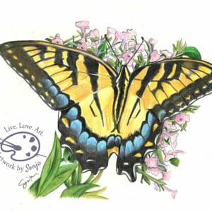 Yellow Swallowtail Drawing by Sonja Petersen