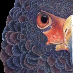 Bateleur eagle finished 2700 gpyi1j