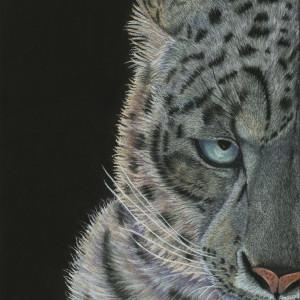 Snow leopard finished 3 sunrwa