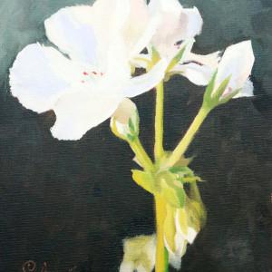 White Geranium I