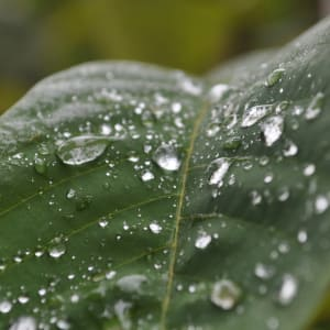 Water Droplets by Nitin Warier